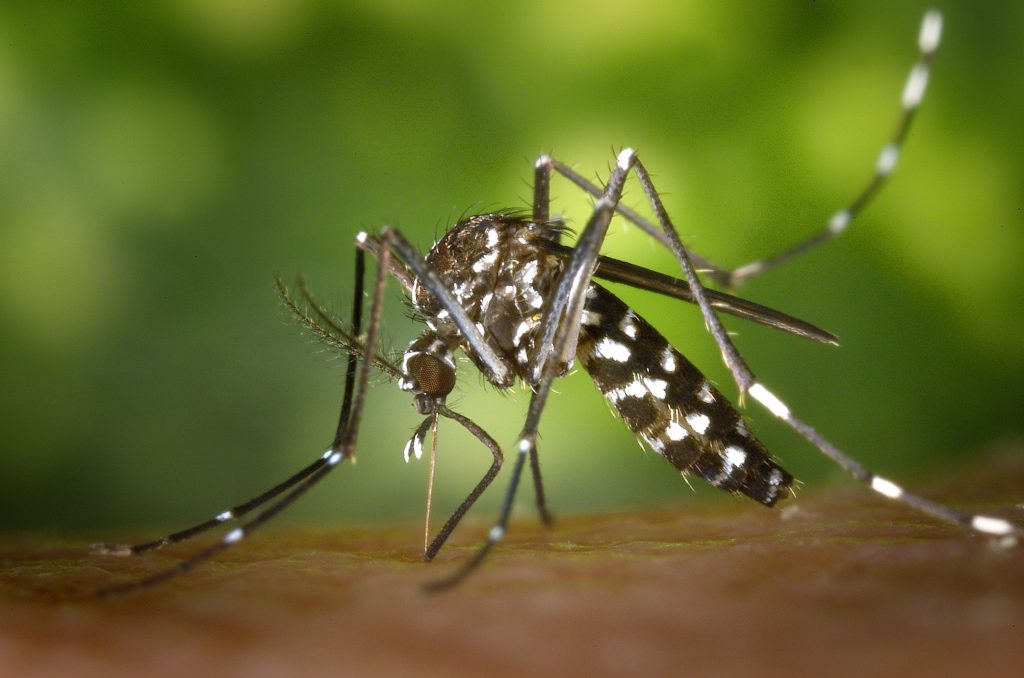 Natural alternatives when dealing with mosquitoes